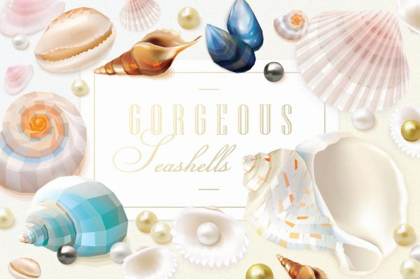 Gorgeous Seashells