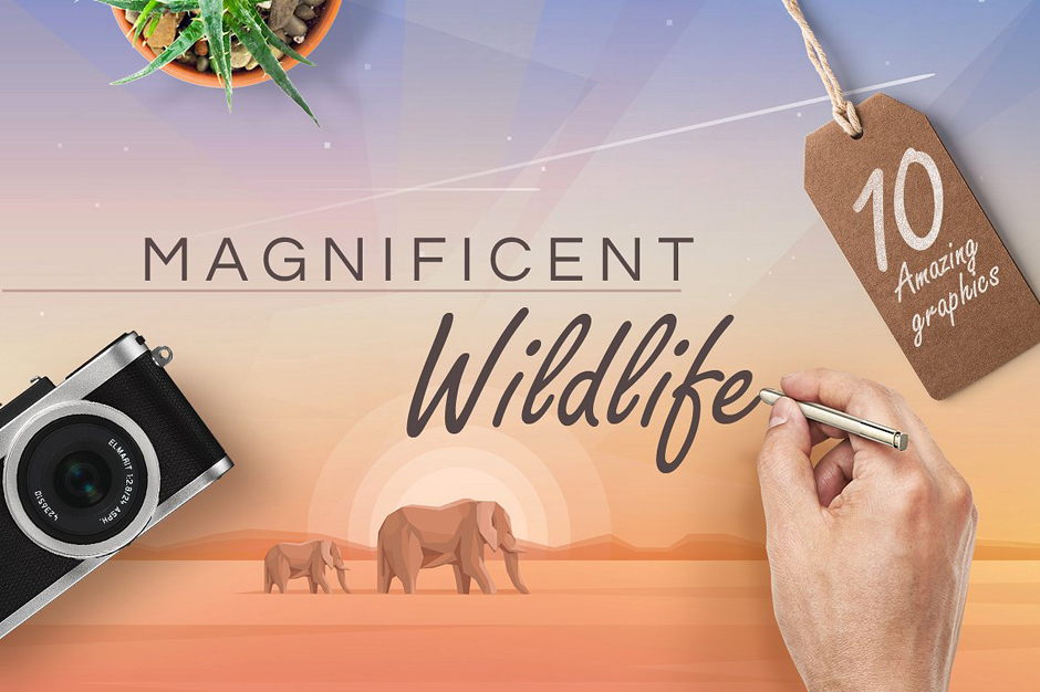 Magnificent wildlife
