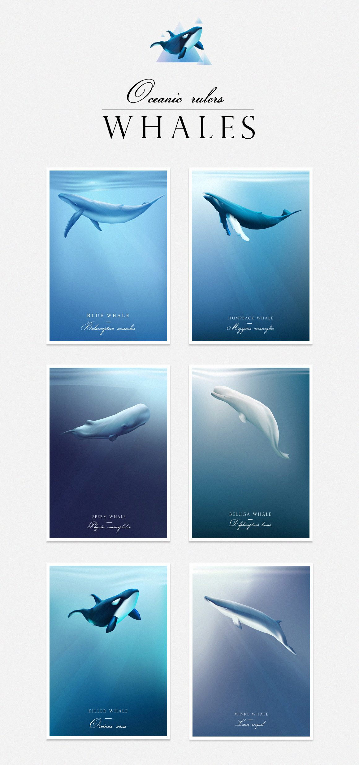 Oceanic Rulers-Whales